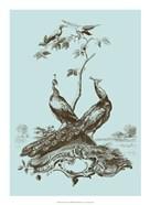 Avian Toile II