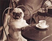 Cafe Pug