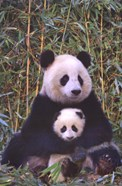 Panda And Baby