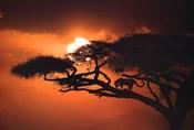 African Sky II