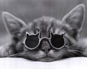 Cool Cat I