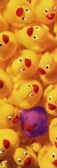 Quack Quack II