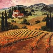 Dawn of a Tuscan Vineyard