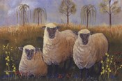 We Three Sheep
