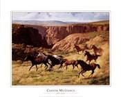 Canyon Mustangs