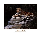 Jaguar on Rock