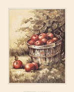 Barrel Apples