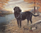 Black Lab with Decoys