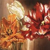 Tulips - square