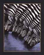 Zebra's Watering Hole