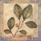Leaf Botanicals IV - petite