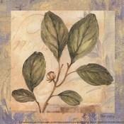 Leaf Botanicals IV - petite