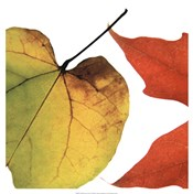 Inflorescent Leaves I