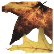 Inflorescent Leaves II