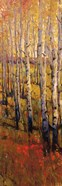 Vivid Birch Forest I