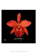 Vivid Orchid IX