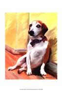 Being a Beagle