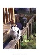 Cats Fencing