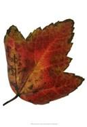 Leaf Inflorescence I