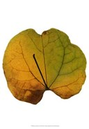 Leaf Inflorescence III