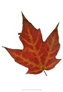 Leaf Inflorescence V