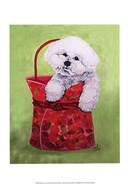 Bichon Carry-On