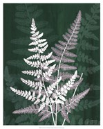 Jewel Ferns IV