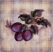 Tartan Fruit-Plum