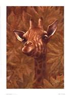 Safari Giraffe