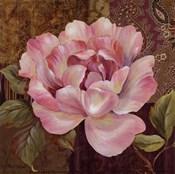 Esperance Rose - petite