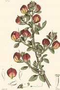 Antique Floral Plate I