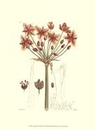 Antique Floral Plate IV