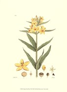 Antique Floral Plate VIII
