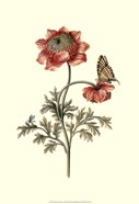 Flora & Fauna IV