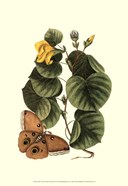 Sm Catesby Butterfly&Botan. I (P)
