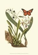 Sm Catesby Butterfly&Botan. IV (P)