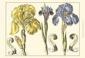 Small Iris in Bloom I (P)