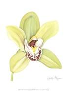 Small Orchid Beauty II (U)