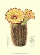 Flowering Cactus I