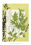 Sm Translucent Wildflowers IV