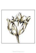 Small Tulip Sketch I