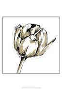Small Tulip Sketch II