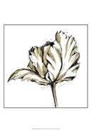 Small Tulip Sketch III
