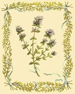 Small Thyme