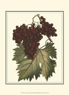 Vintner's Varieties III
