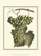 Vintner's Varieties IV