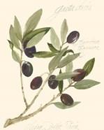 Gaeta Olives