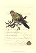 Small Romantic Dove I