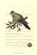 Small Romantic Dove I