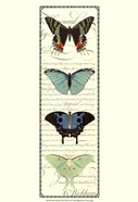 Small Butterfly Prose Panel II